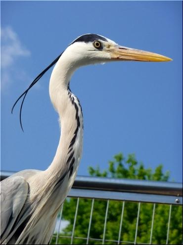 東山動物園 鳥1