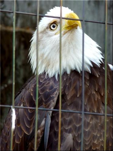 東山動物園 鷲