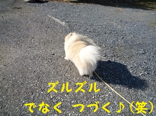 201311281350365ce.jpg