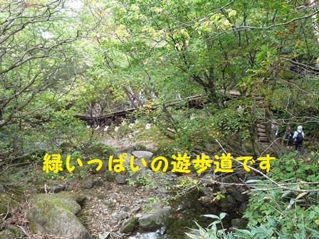 2013120408135771f.jpg
