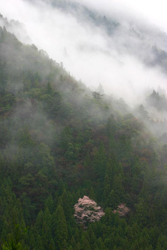 山峡に佇む (徳島県 美馬郡 つるぎ町)