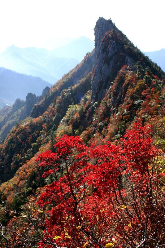 赤い石鎚 (愛媛県 西条市 石鎚山)