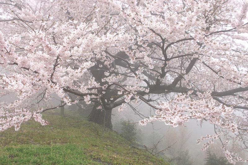 淡艶 (香川県 高松市 五色台)