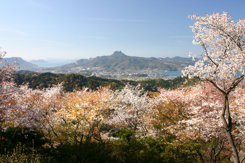 爛漫山桜 (香川県 さぬき市 志度町)
