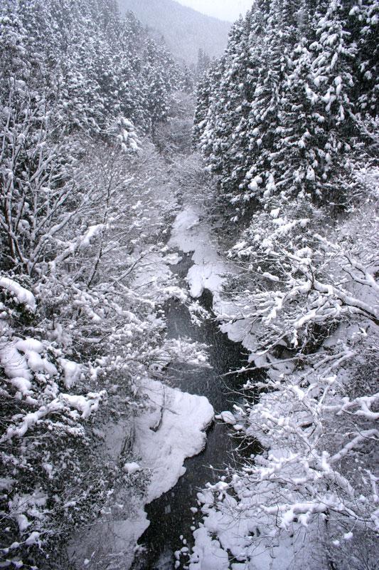 小雪舞う渓谷 (徳島県 三好市 西祖谷渓谷)