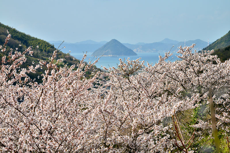 讃岐百景 亀水湾 (香川県 高松市 五色台)
