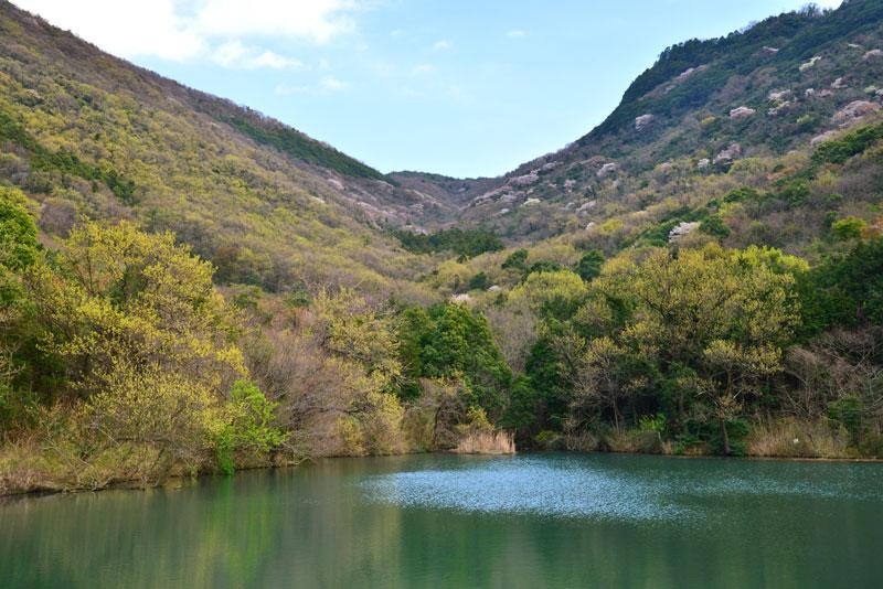 池と山桜 (香川県 坂出市 青海町)