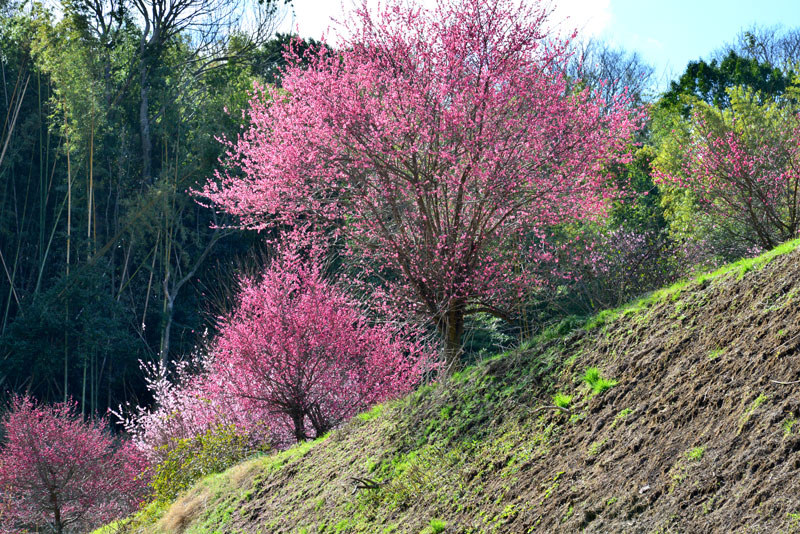 春を謳歌 (香川県 綾歌郡 綾川町)