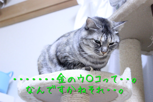 kako-fJEXe4qUkuva5DIF.jpg