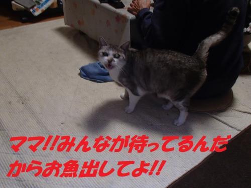 PA265631_convert_20131121095754.jpg