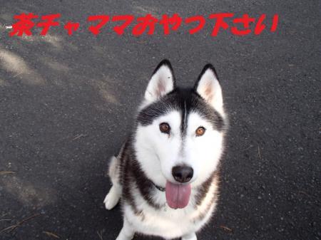 PB145916_convert_20131115073531.jpg