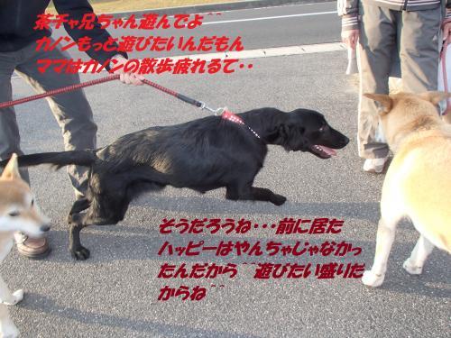 PB236008_convert_20131126041137.jpg