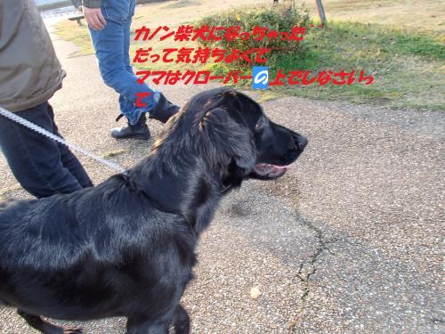 PB246022_convert_20131127054121.jpg