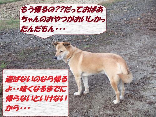 PC066149_convert_20131207075417.jpg