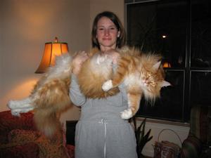 大きいネコ