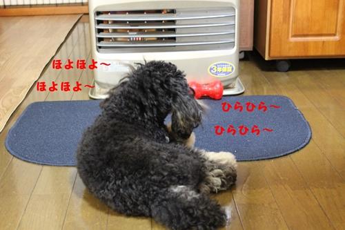 IMG_9206_R.jpg