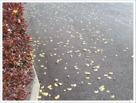 葉っぱ1108