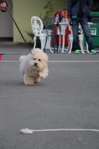 犬-グランプリ