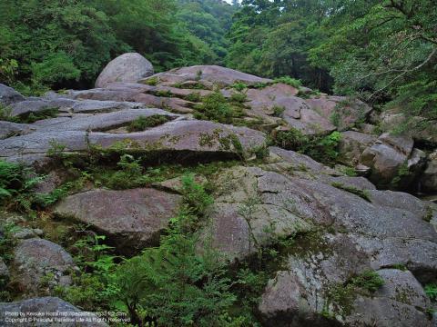 屋久島 白谷雲水峡2