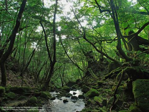 屋久島 白谷雲水峡6