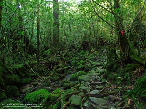 屋久島 白谷雲水峡 もののけ姫の森