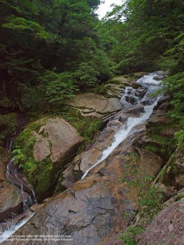 屋久島 白谷雲水峡 飛竜落としの滝
