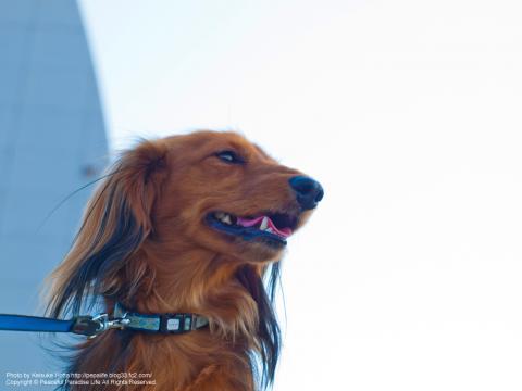 うちの犬の写真