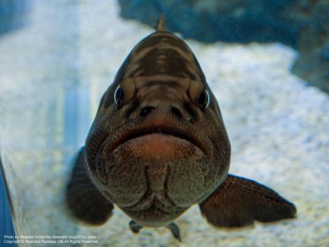 怒った顔の魚