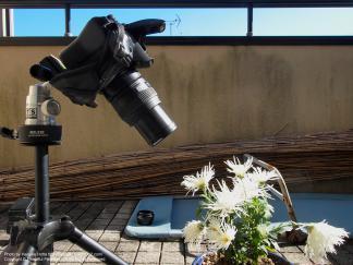 50mm F2.0 Macro + EC-14