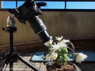 60mm + EX-25