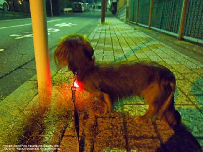 E-P3 絞り優先(A)モードの試し撮り写真3 夜のお散歩