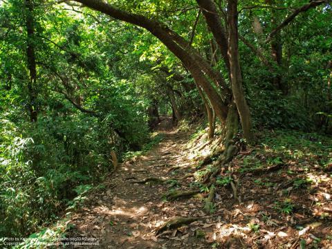 三浦アルプスの山道