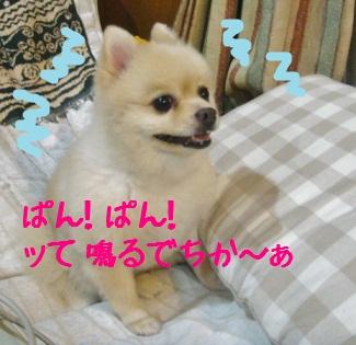 DSC01706.jpg
