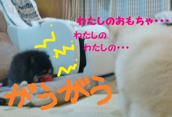 DSC01783.jpg