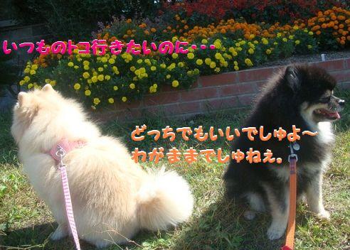 DSC01896.jpg