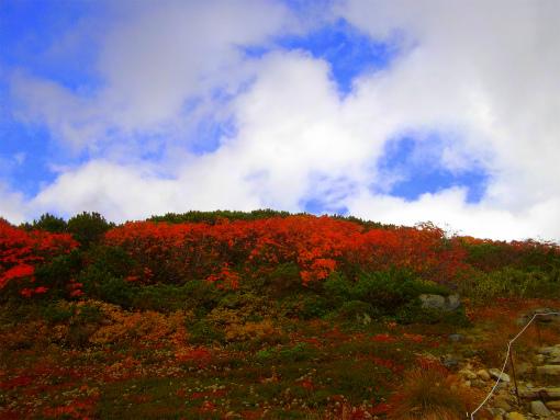 s-513-6登山道脇の紅葉