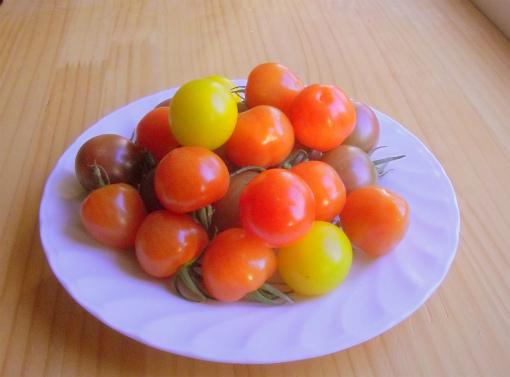 s-518-6ウチのミニトマト