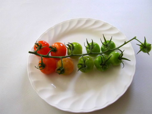 s-521-2ミニトマト