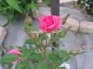 2012062720274181d.jpg