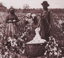 cottonpicking.jpg