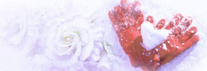 snow-rose.jpg