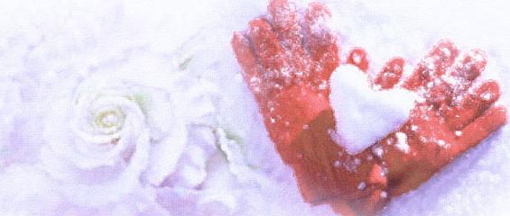snow-rose1.jpg