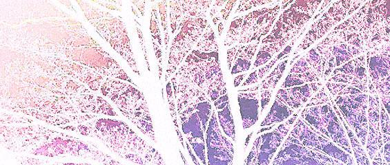 snow-tree1.jpg