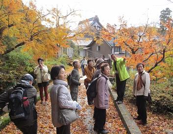 金剣宮の裏参道(おんな道)で行く秋を堪能
