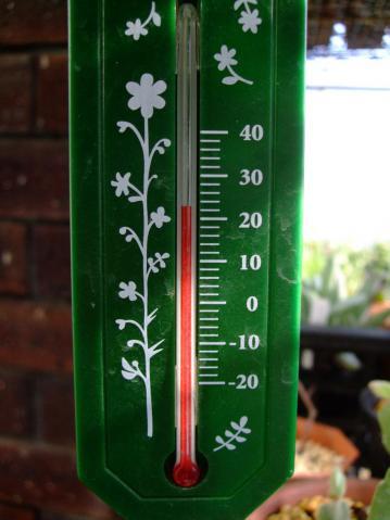 お天気の良い昼間~温室の中は23℃くらいポカポカですが・・・夜間は7℃・・・2012.11.25