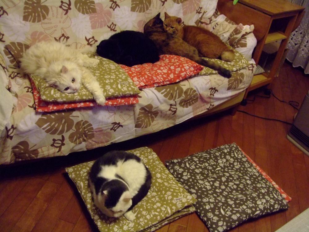 家の5ニャン~♪居間のソファーは占領されてま~す♪2012.12.04