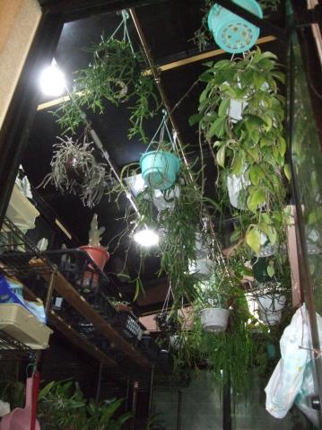トルネード節電蛍光灯~3箇所つけて日光対策・・・のつもりです♪ないよりはまし~2012.12.06