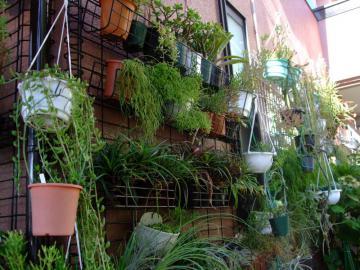 北側玄関通路の観葉植物~♪アナナス、リプサリス、セロペギア、ディスキディアなど2012.09.11