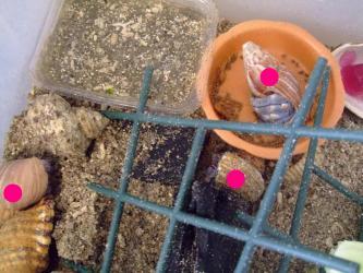 オカヤドカリさんたち~2012.09.24は大きいの3匹地上にいました!