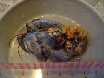 大きいオカヤドカリ1匹が・・・からを脱いでそのまま砂上に動かずいました・・・脱皮殻かとも思いましたが、よく見ると死んでしまったようです(´ヘ`;)あ゛~2012.09.28